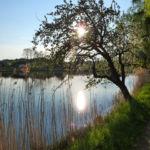 Hammerschmiedesee Frühjahr